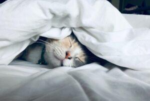 micio dorme coperta