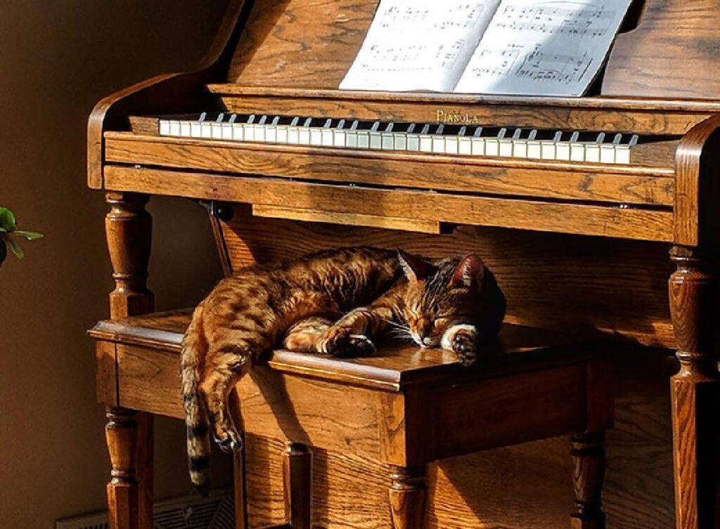 gatto dorme su pianoforte