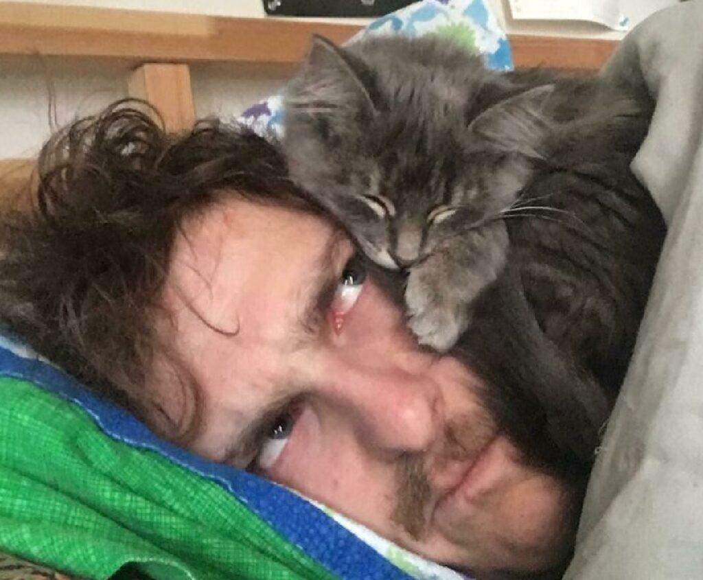gatto grigio dorme su proprietario