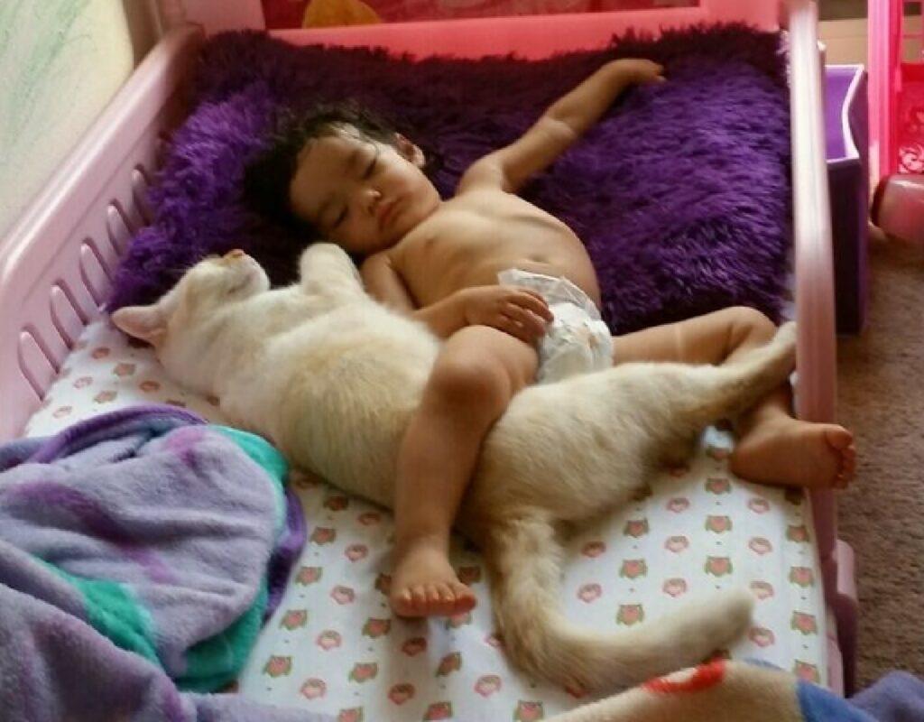 gatto insieme piccolo bambino