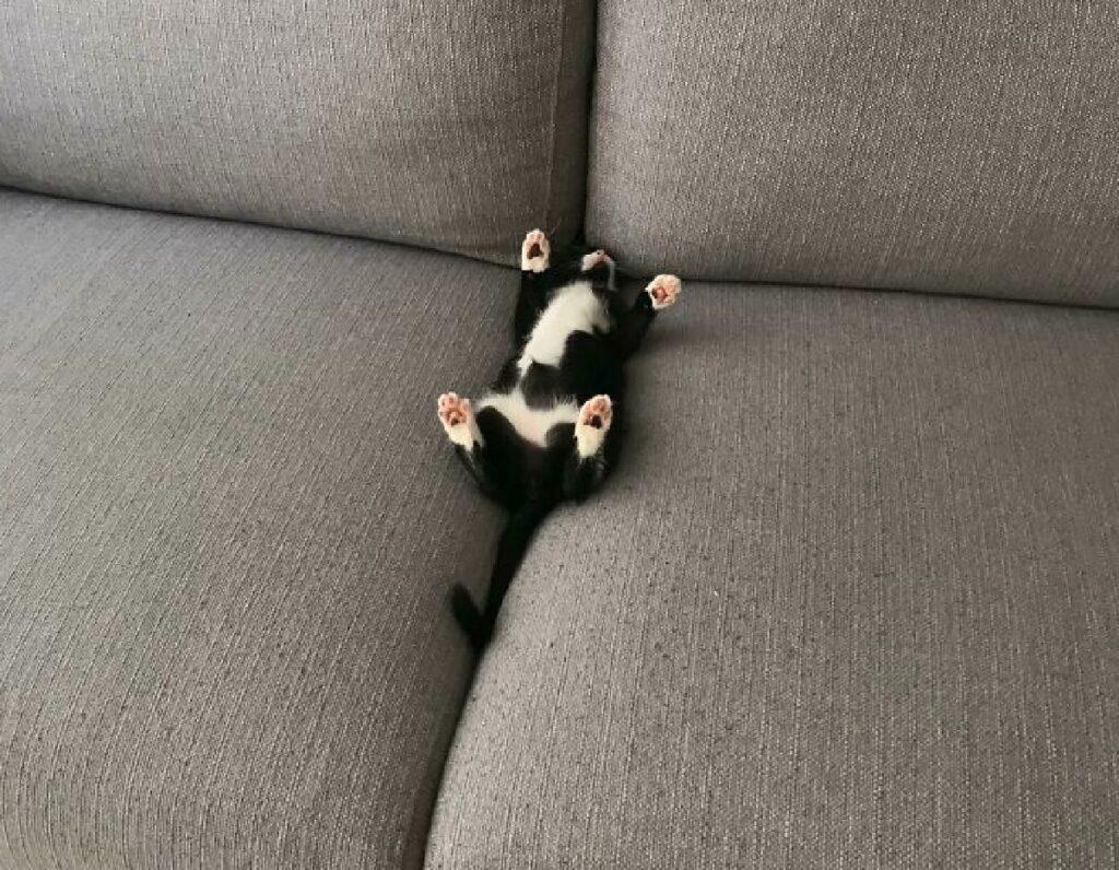gattino piccole dimensioni
