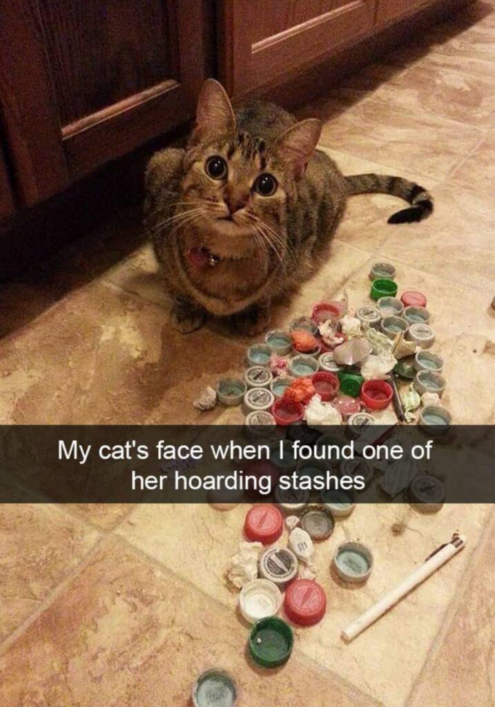 gatto tenero tappi