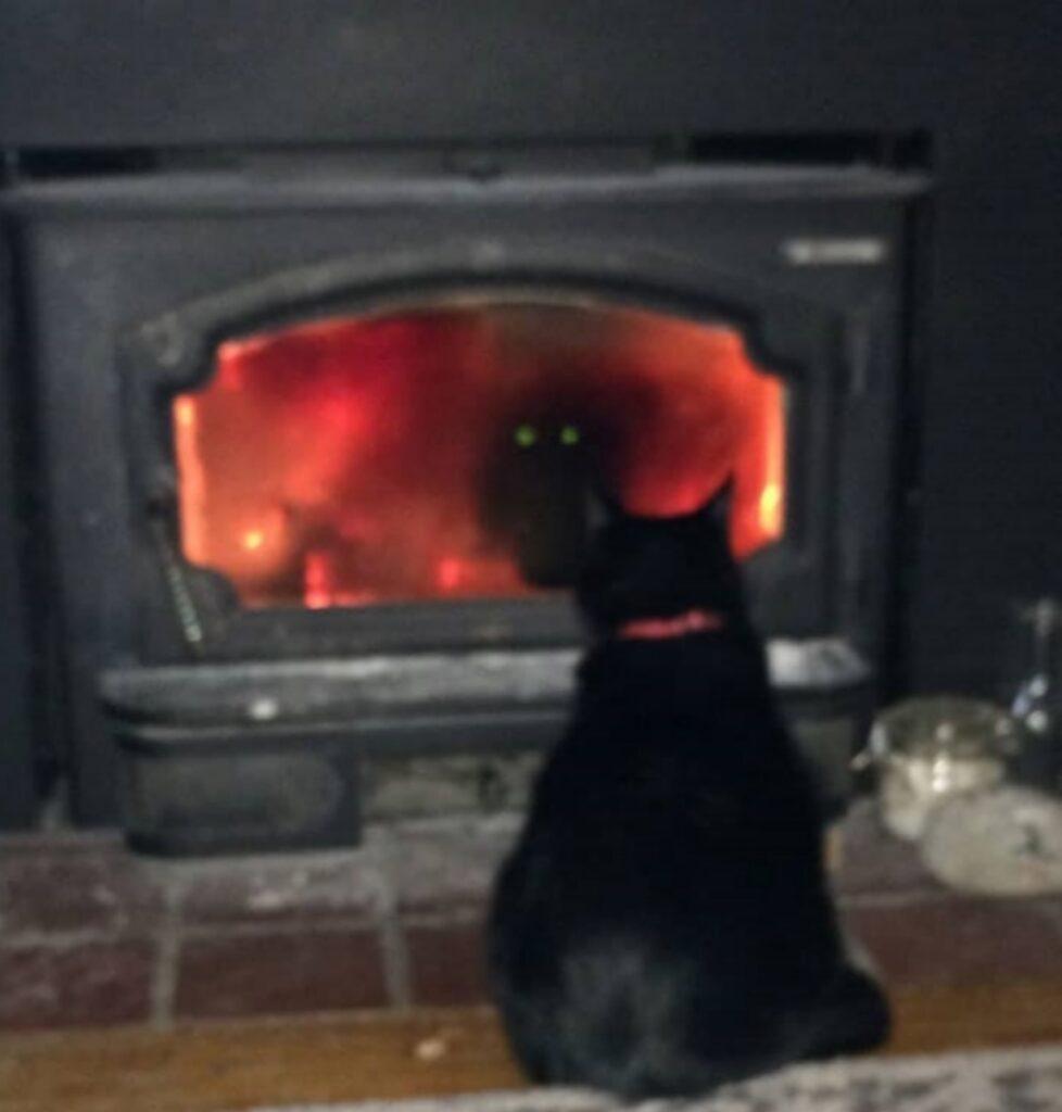 gatto guarda stufa