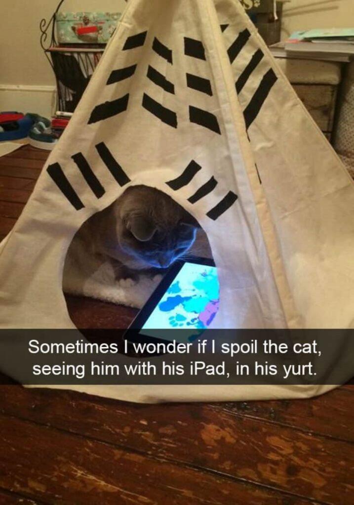 micio tenda simpatico