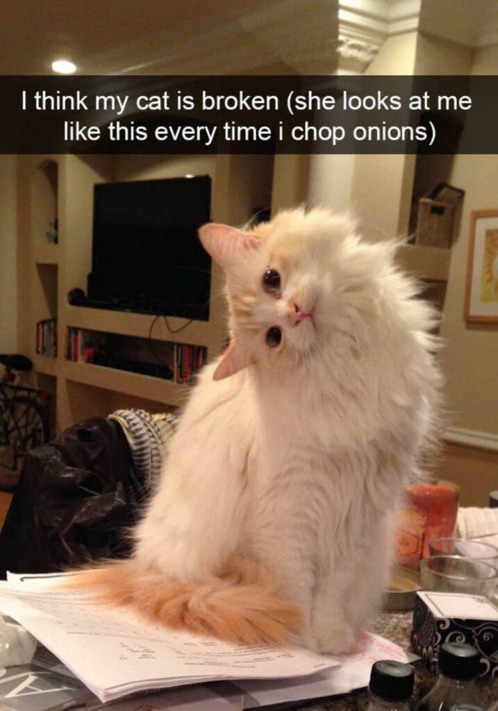 gatto testa inclinata