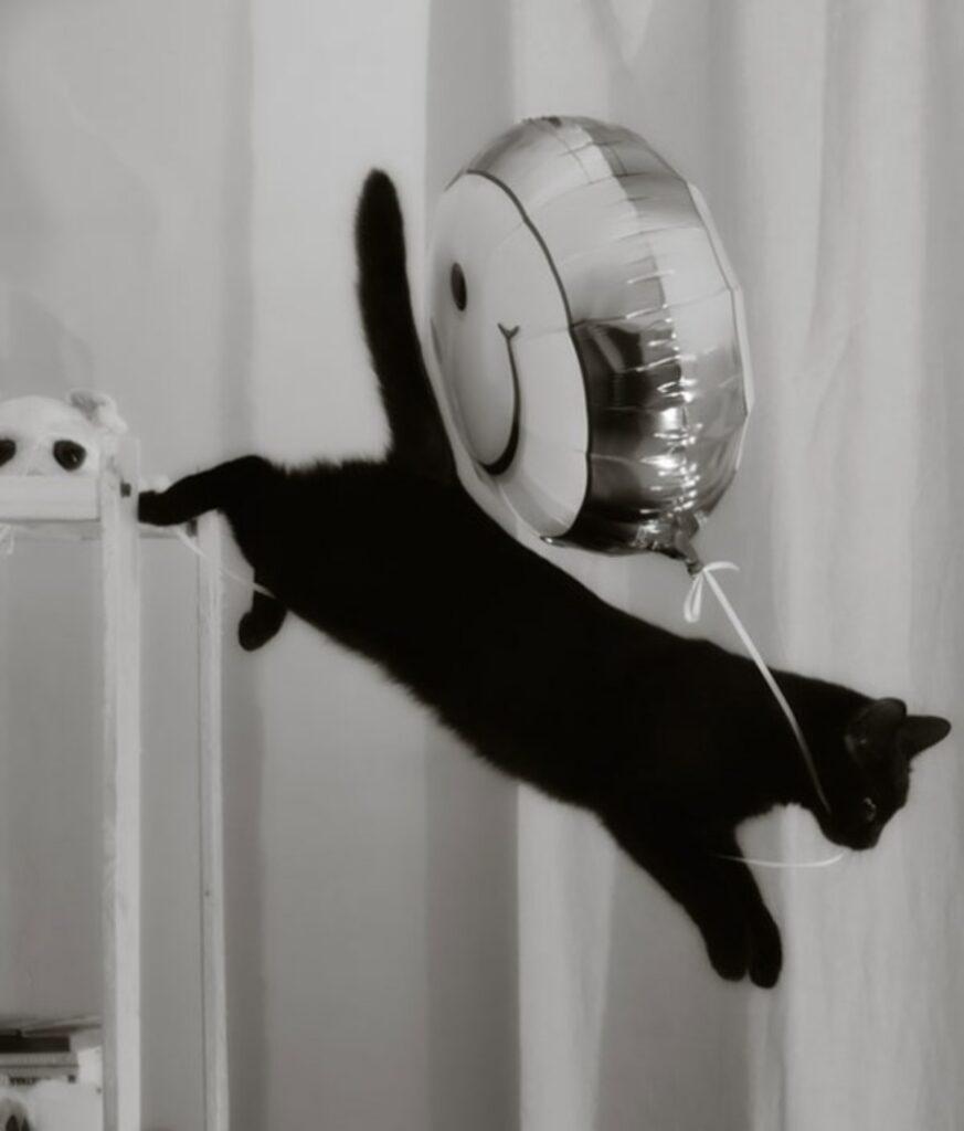 gatto nero salto