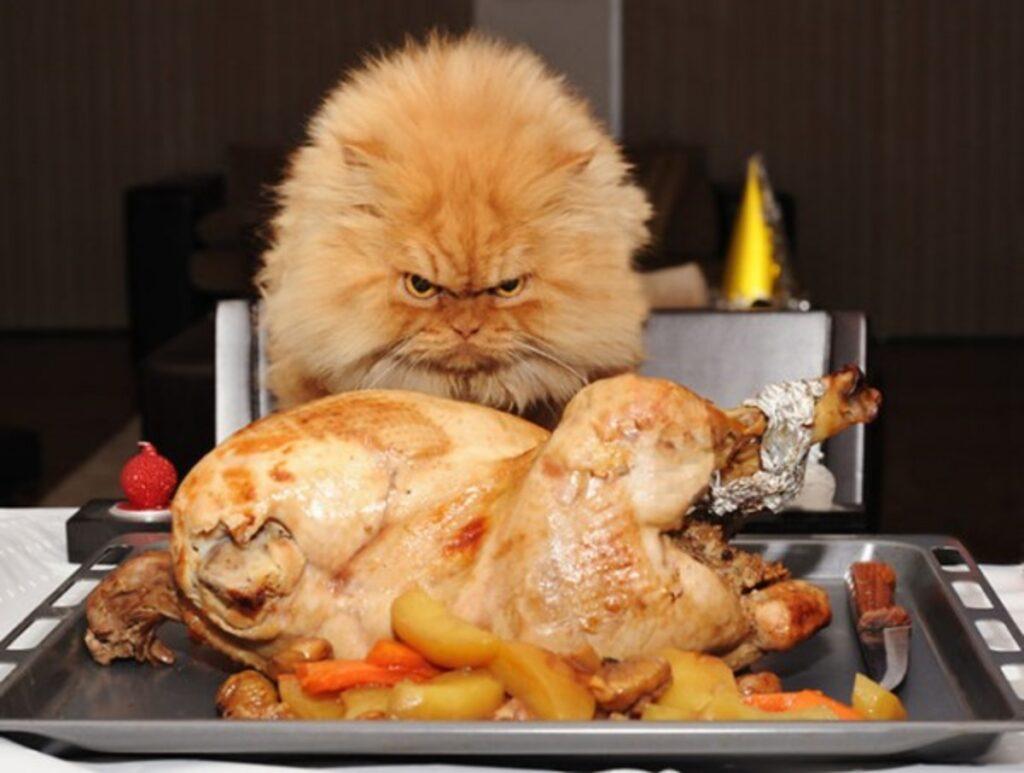 gatto pollo arrosto