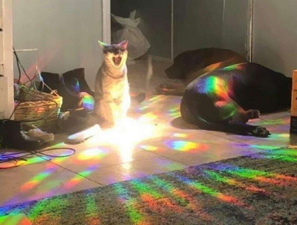 gatto luce parte dalla base