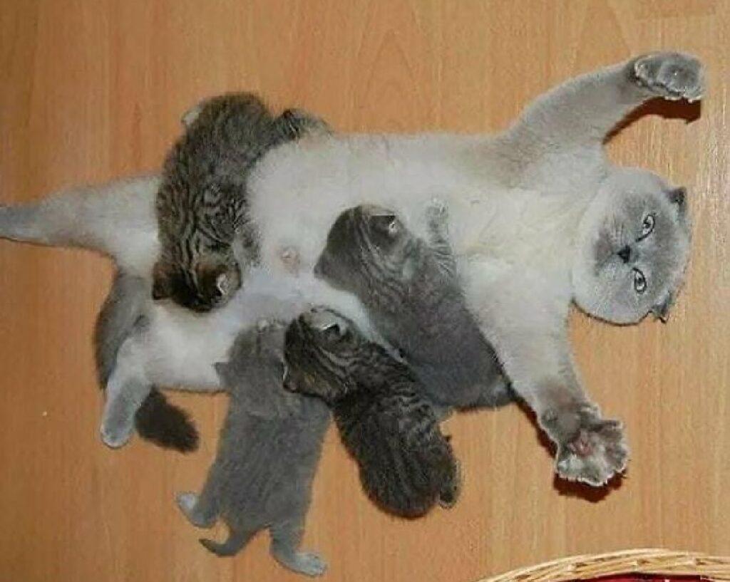 gatto sovrastato dai piccoletti