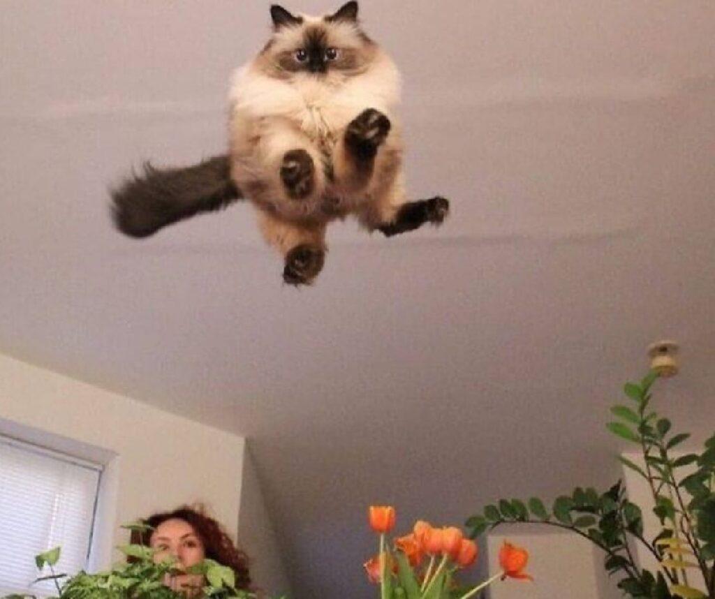 gatto salto sui fiori