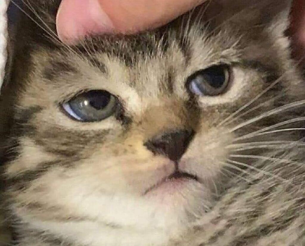 gatto faccia poco interessata