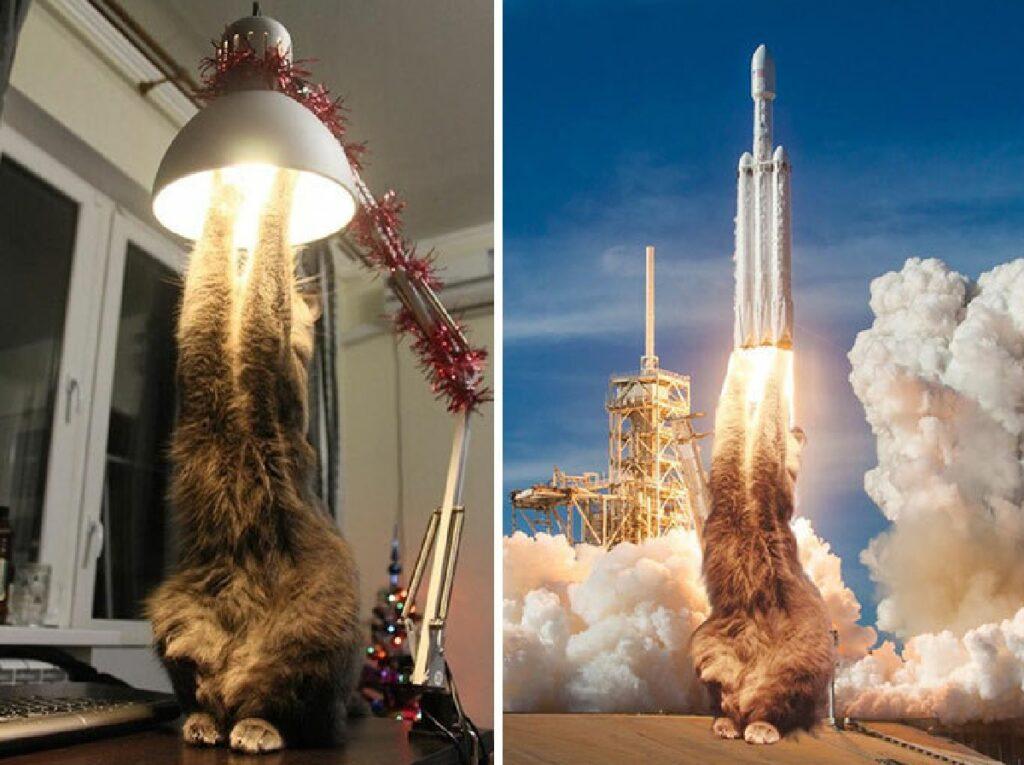 gatto su lampada aggrappato