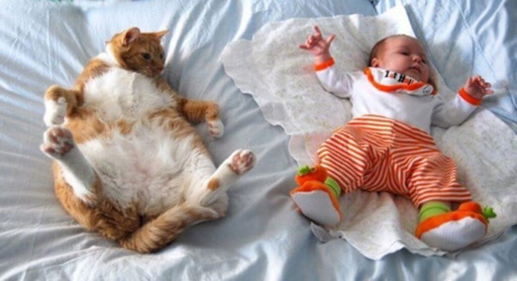 bimbo gatto letto