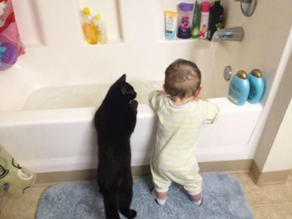 gatto vasca acqua