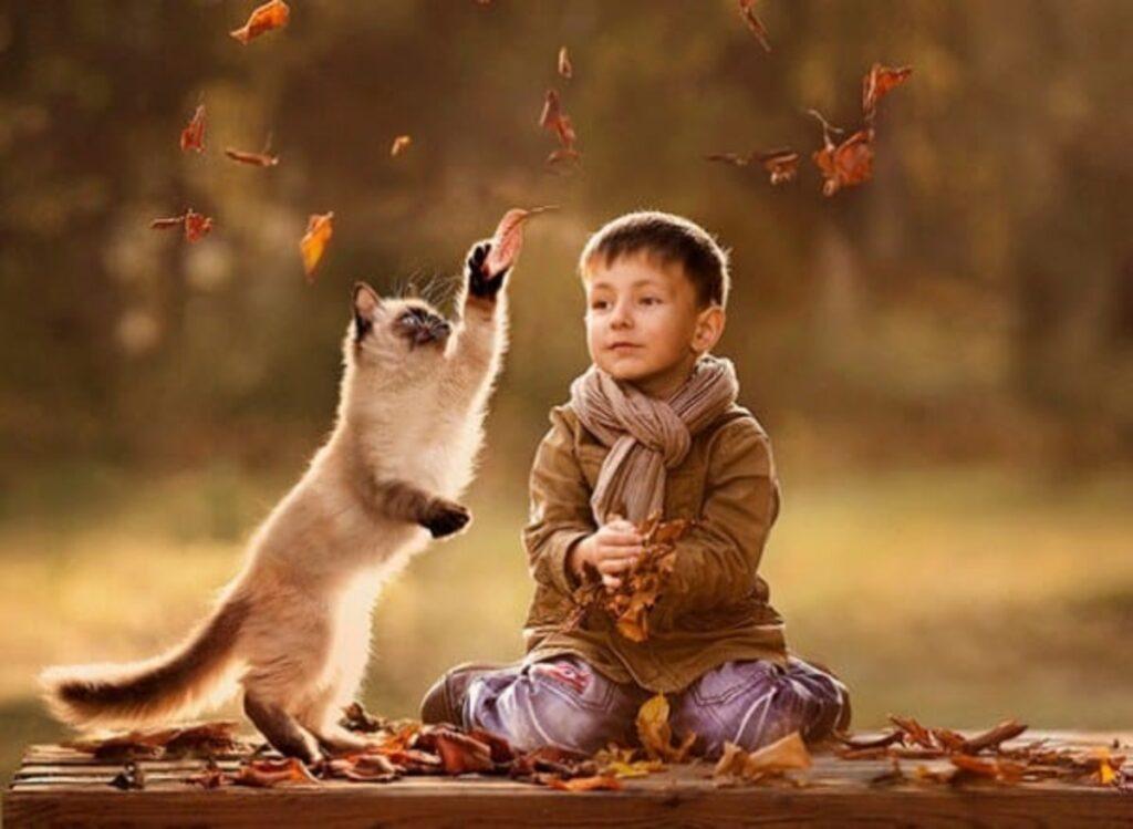 gatto gioca foglie