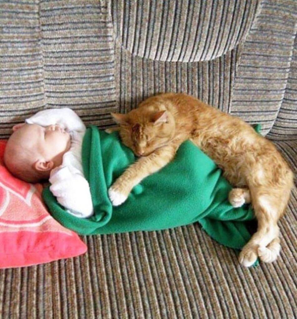 sonnellino gatto riposa