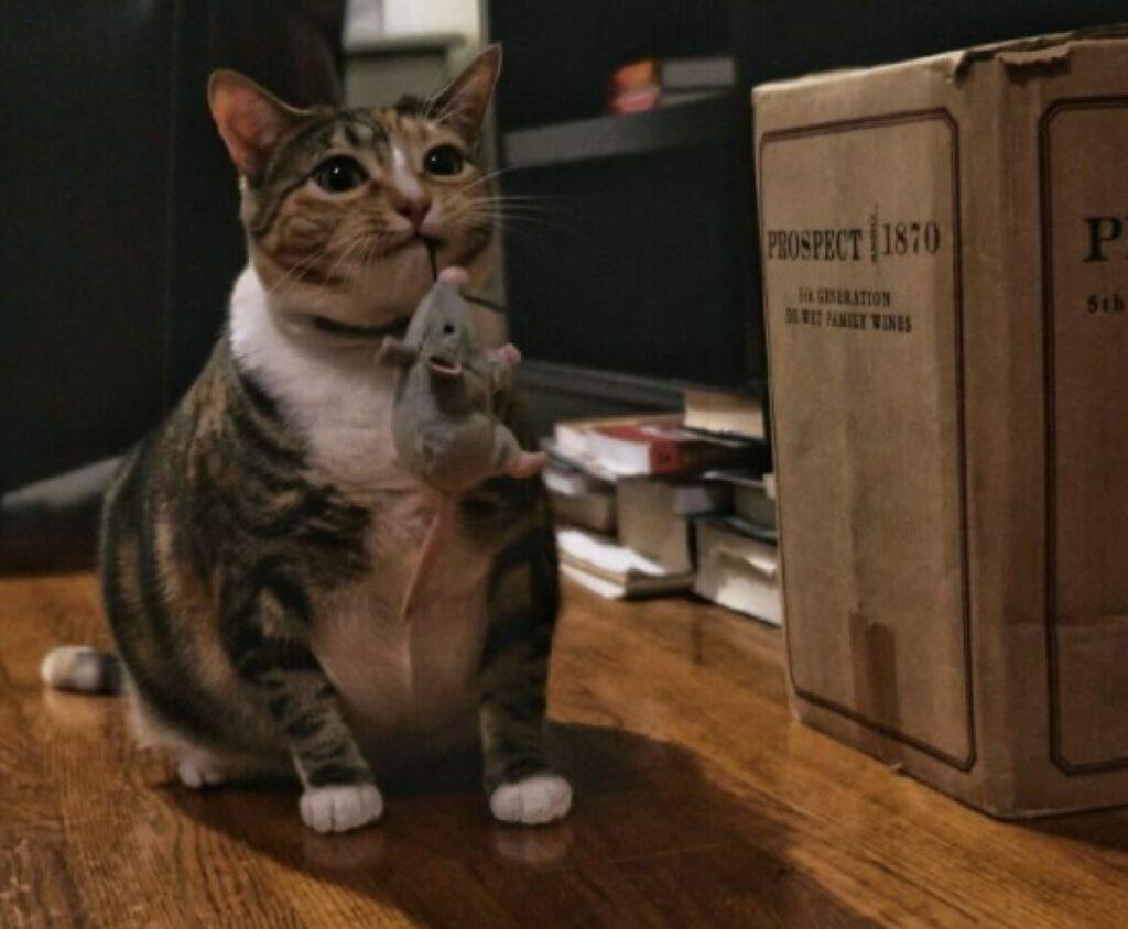 gatto pensa di aver preso topo reale