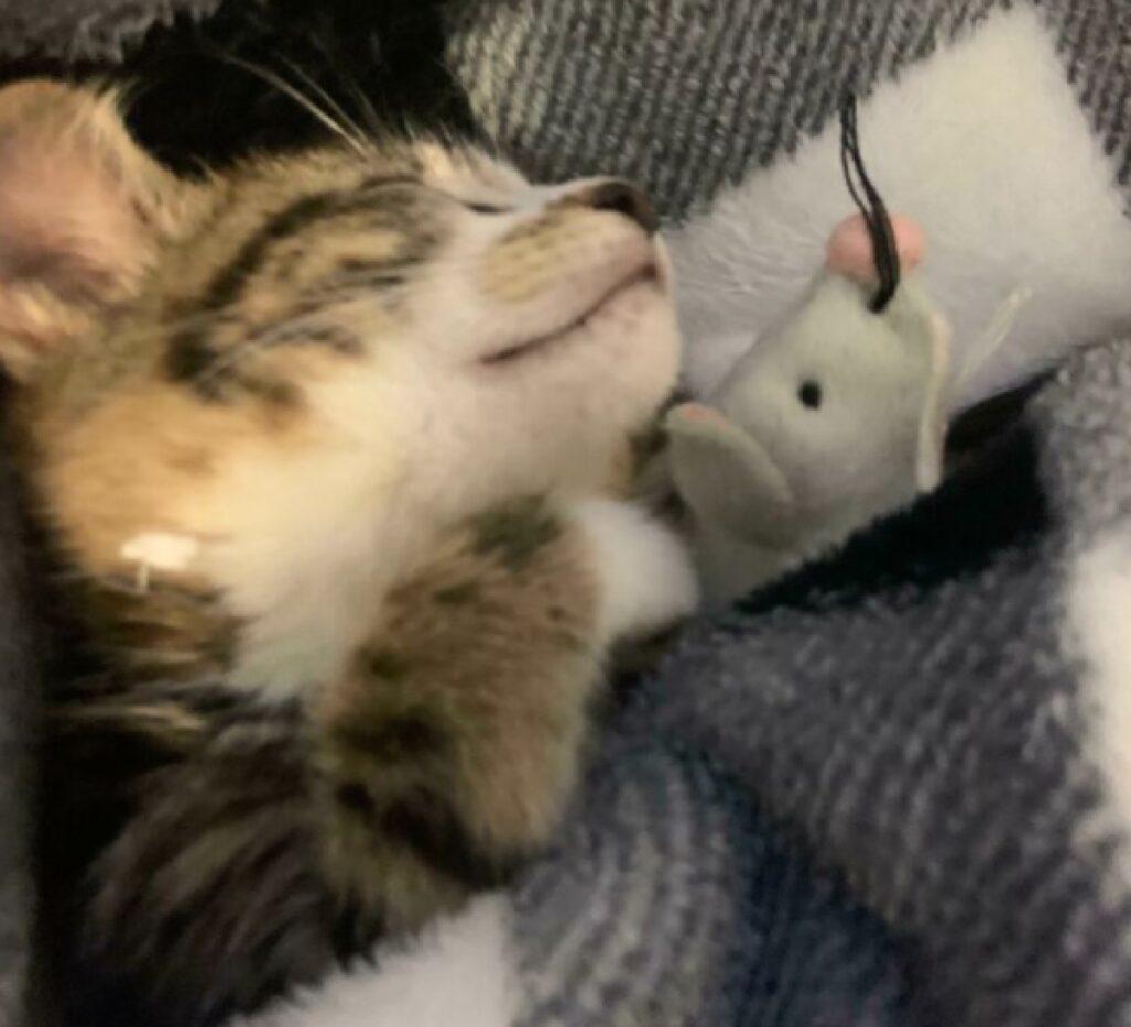gatto si addormenta con topolino
