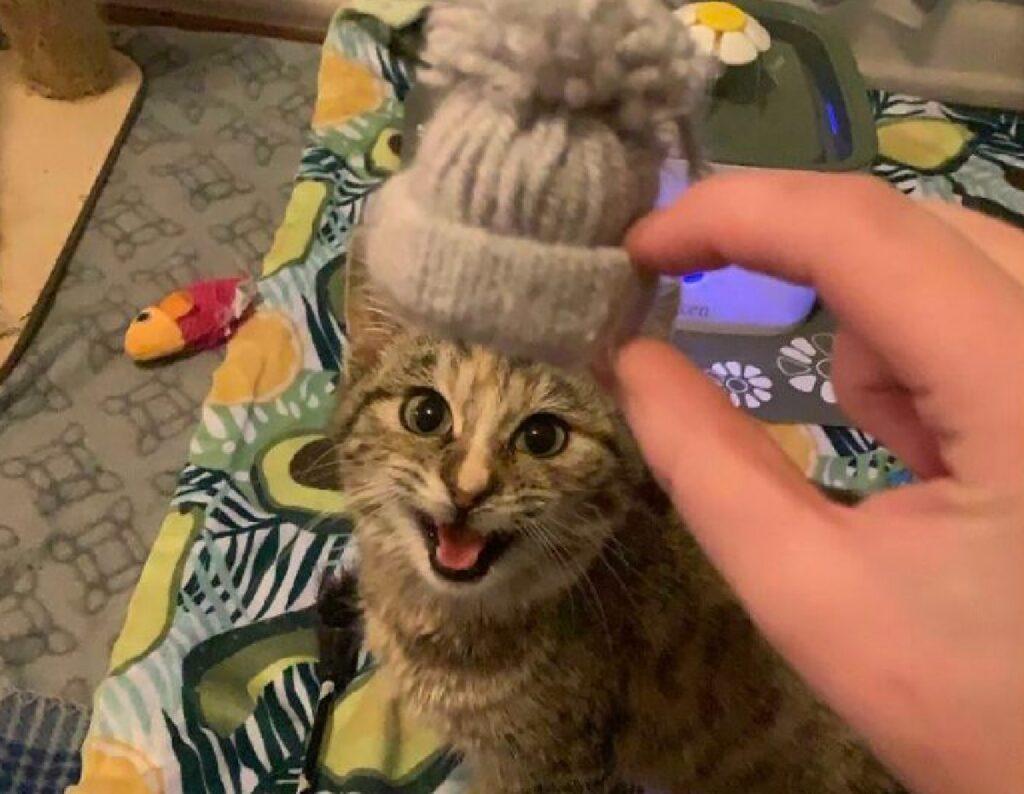 gatto cappello su testa