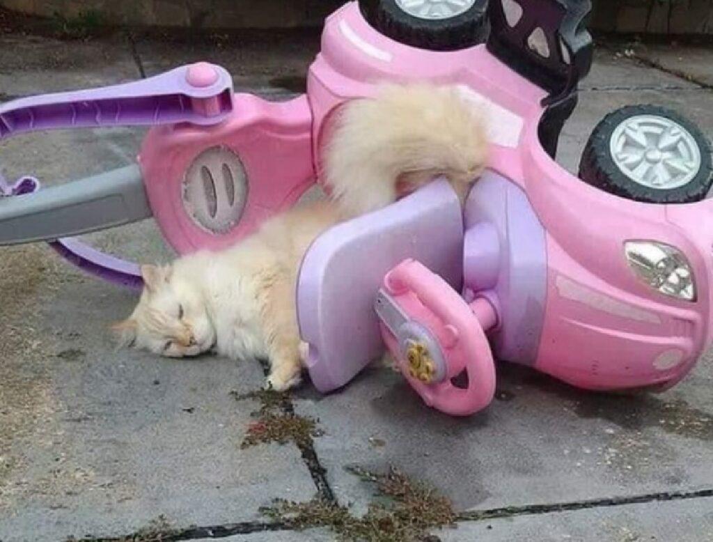 gattino si ribalta con auto