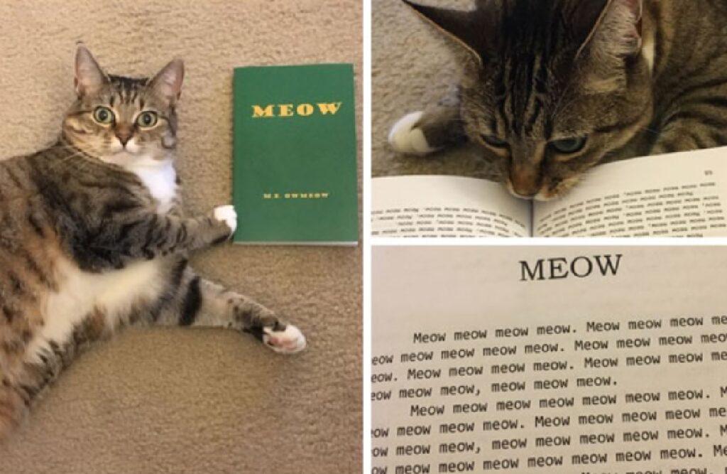 gatto autore di un libro