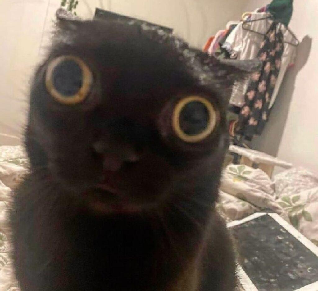 gatto nero occhi giganti
