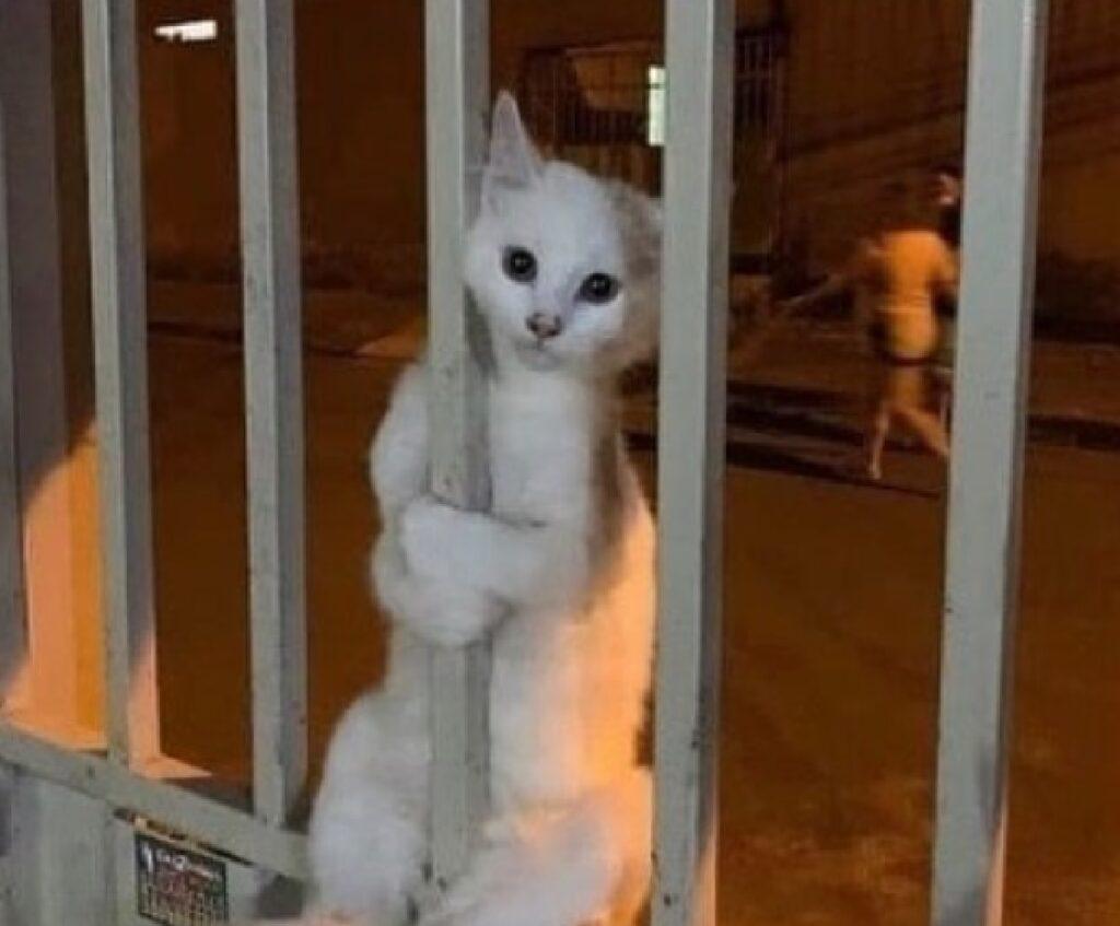 gatto dietro sbarre acciaio