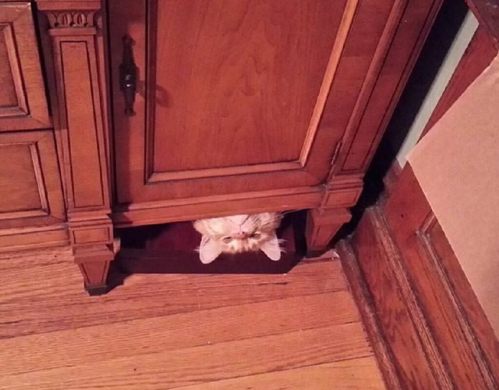 gatto testa al contrario armadio