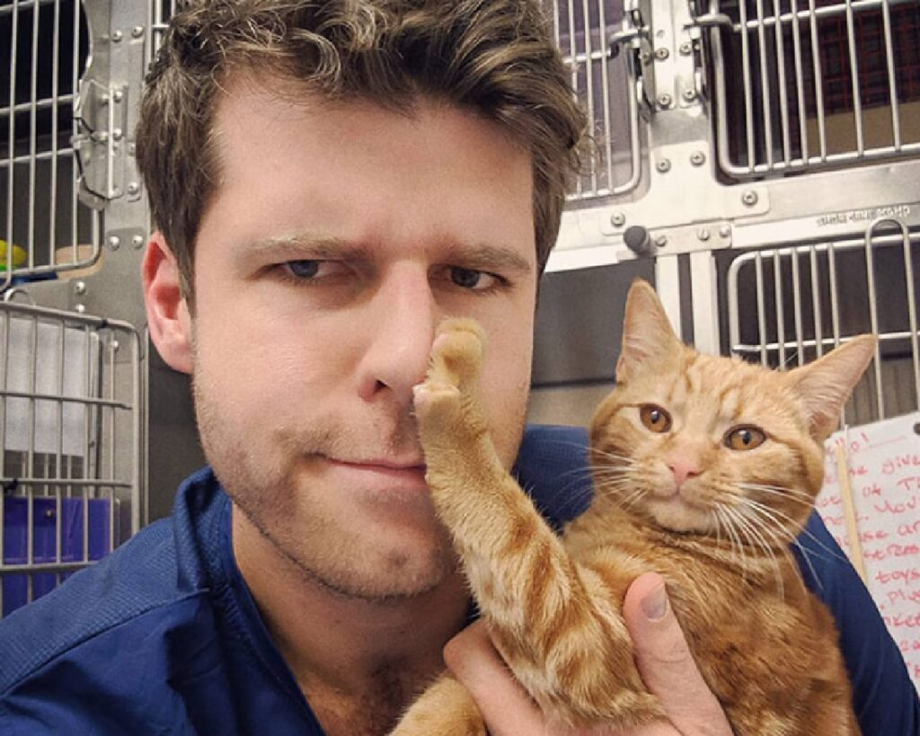 gatto rosso dice no all'uomo