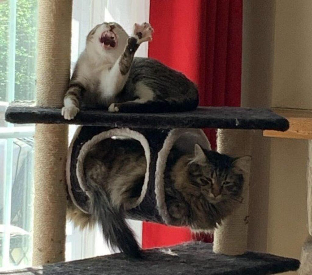 gatti buffi insieme
