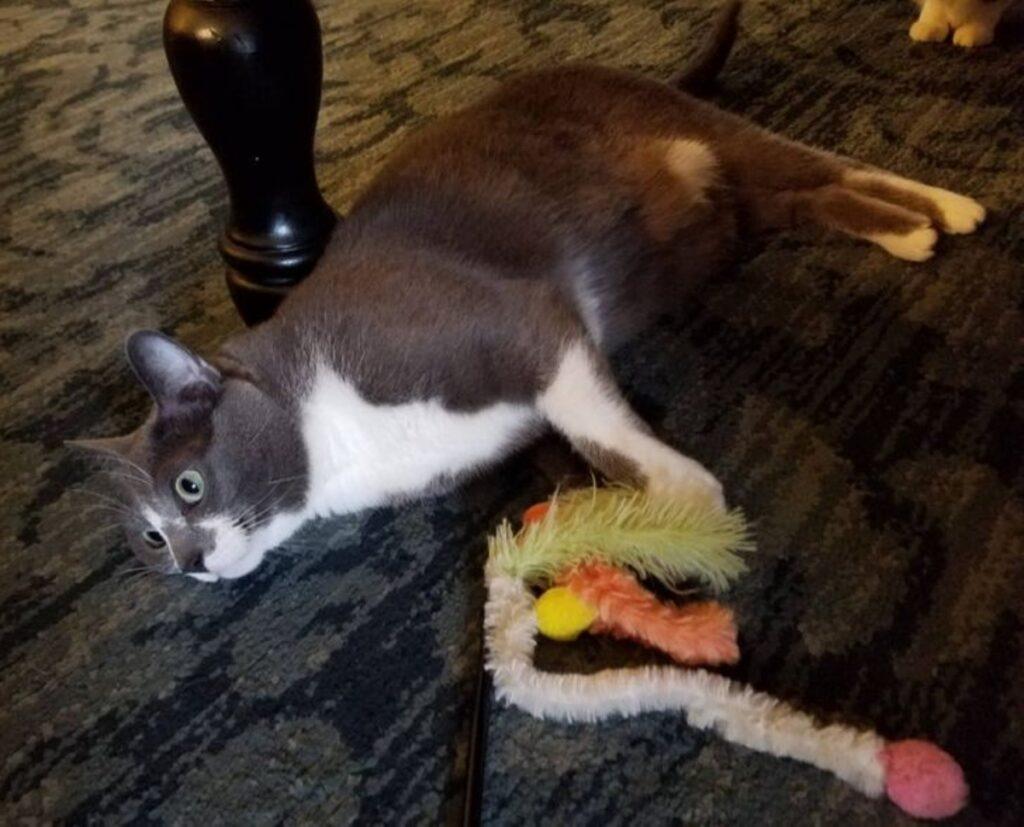 gatto fermo gioco