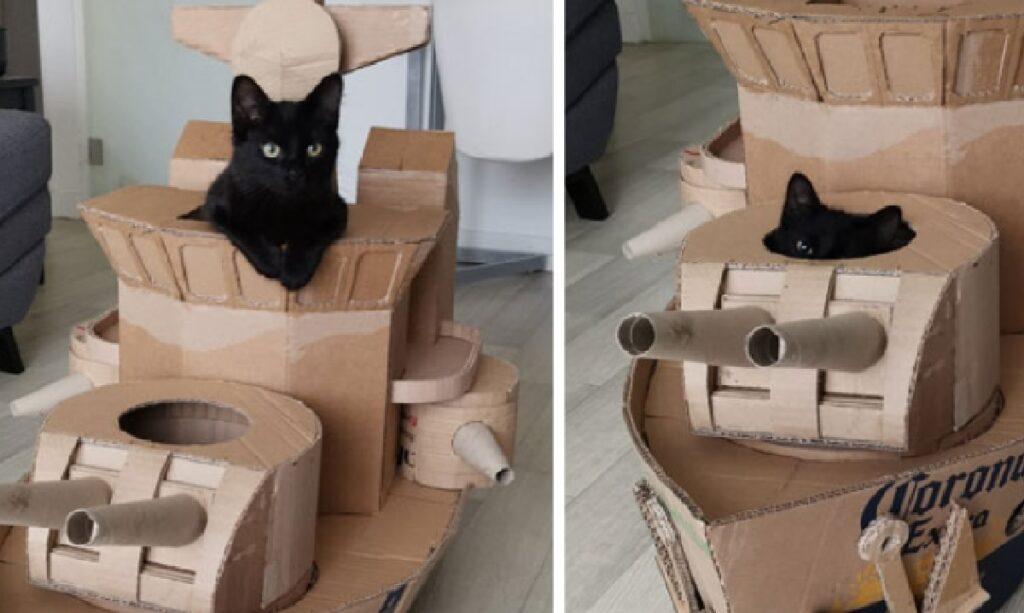 gatto dentro cannoniera
