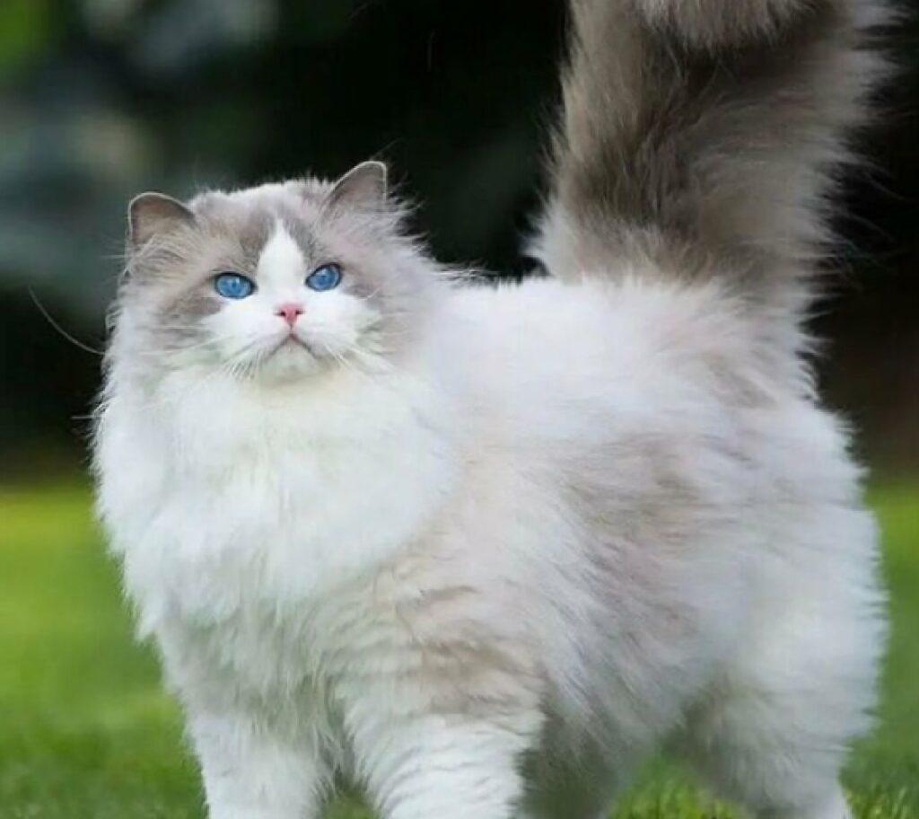 gatto grande giornata giardino