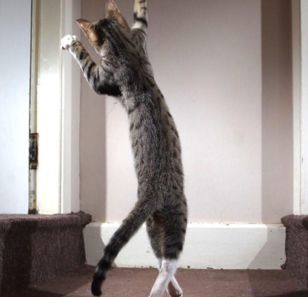 gatto danza nel soggiorno