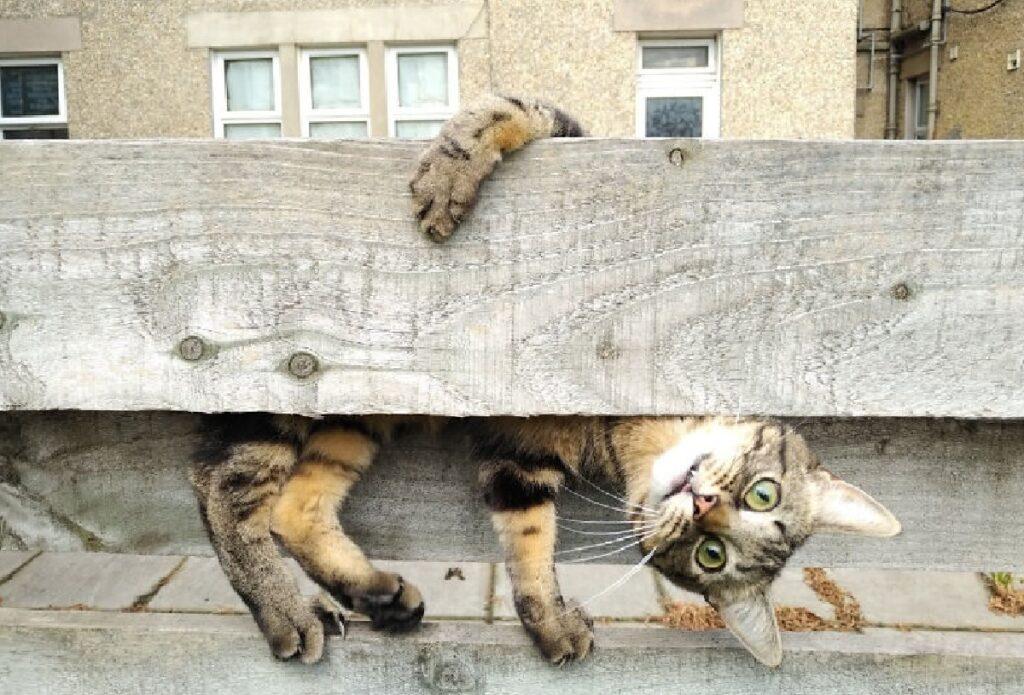 gatto aggrappato trave di legno