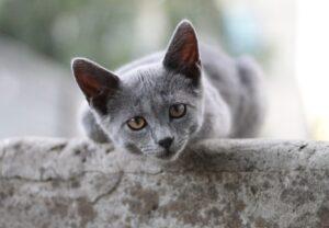 foto di gatti vincitori premio
