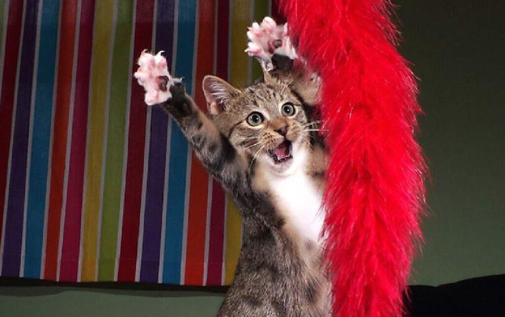 gatto vicino piuma rossa