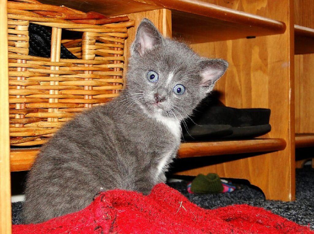 gatto su panno rosso
