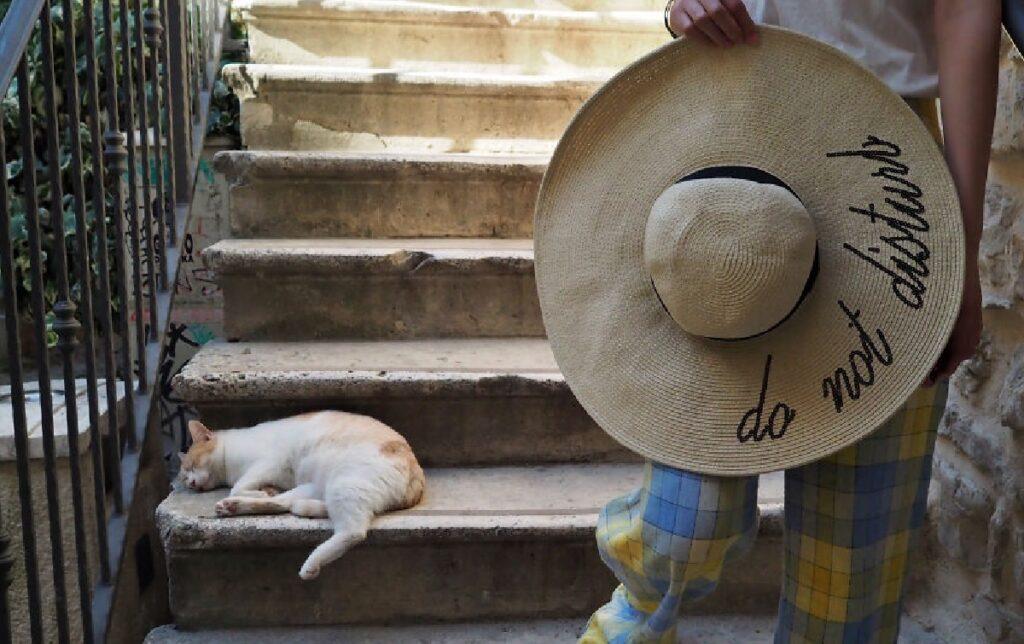 gatto cappello parla chiaro