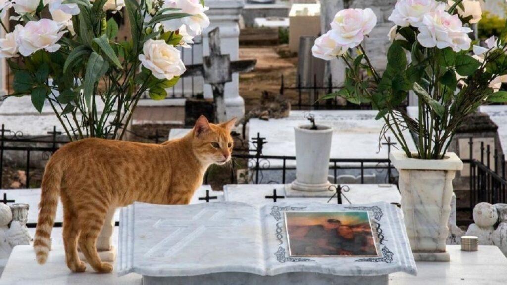 gatti nel cimitero