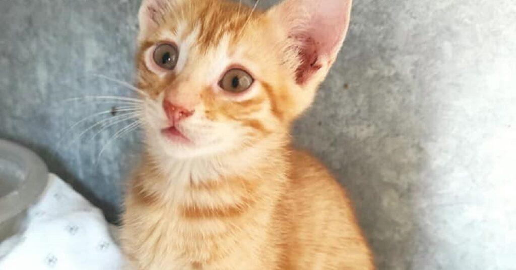 gattina dal naso rosa