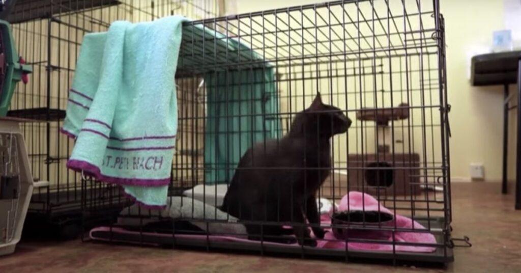 gatto nero in gabbia