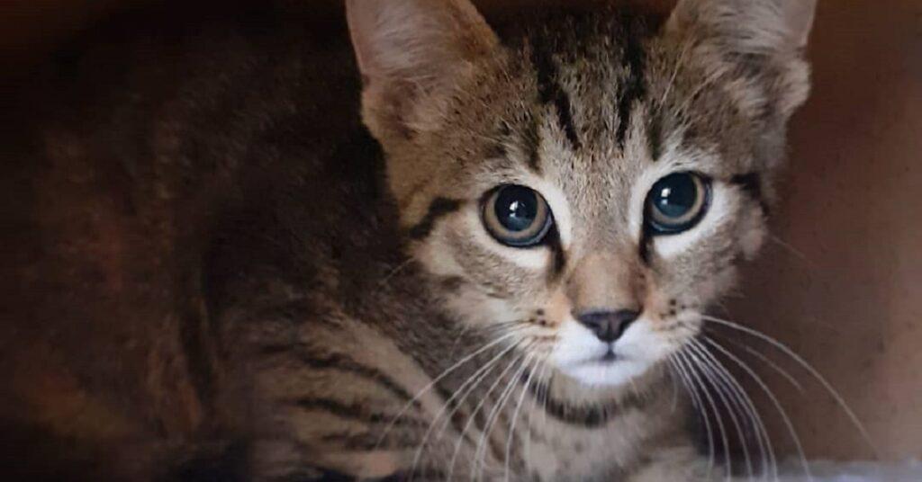 gatto dagli occhi gialli