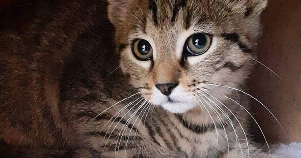 gattino di un anno e mezzo