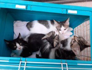 gattini dentro una scatola
