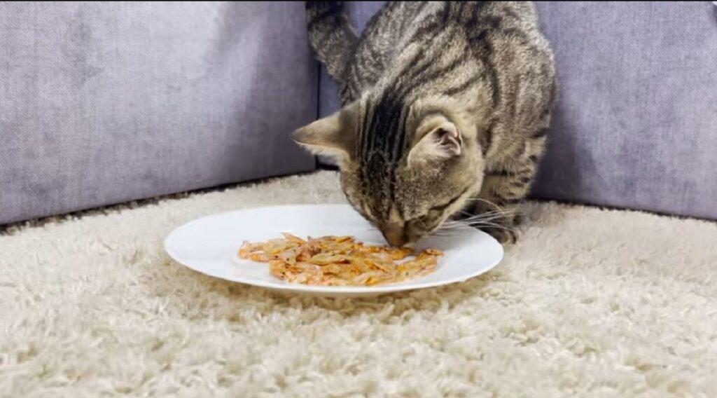 il gatto sammy mangia i gamberetti