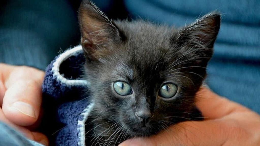 gatto rinchiuso per settimane in casa