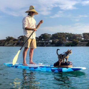 maverick gatto surfista