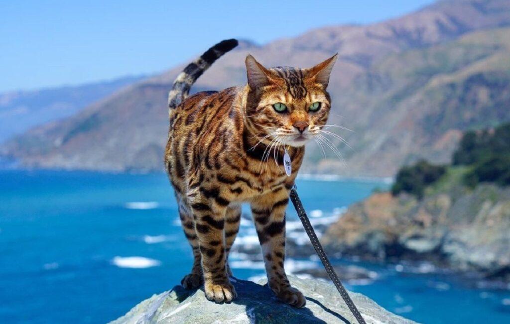 il gatto surfista