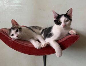 coppia di gattini che si riposa